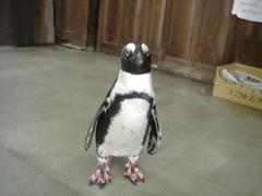 売店でたたずむペンギン