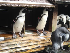 ペンギン小屋
