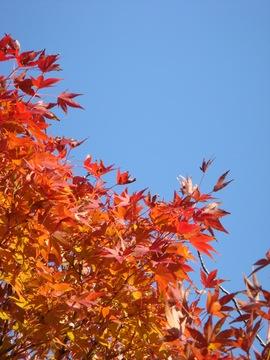 舞鶴城公園の紅葉